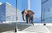 Elephant on the streets of the modern city