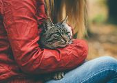 foto of homeless  - Gray Cat homeless and Woman hugging Outdoor Lifestyle and Friendship helping concept - JPG