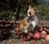 harvest hound