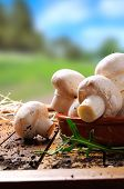 pic of picking tray  - freshly picked mushrooms on a wooden table in the field - JPG