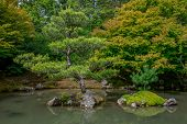 picture of bonsai  - Bonsai look trees in Japanese garden - JPG