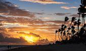 stock photo of atlantic ocean  - Sunrise over Atlantic ocean coast with palm trees silhouettes - JPG