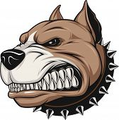 picture of animal teeth  - Vector illustration Angry pitbull mascot head - JPG