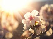 stock photo of apricot  - Springtime - JPG
