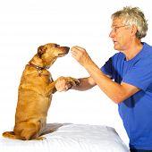 Ausbildung des Hundes