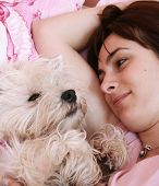 picture of westie  - Westie sleeping next to woman in bed . ** Note: Shallow depth of field - JPG