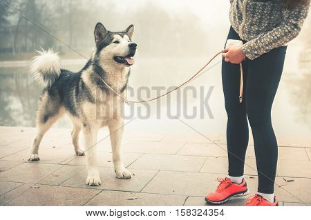 poster of Image of young girl running with her dog, alaskan malamute, outdoor at autumn or winter. Mourning jogging. Healthy lifestyle. Husky. Guide-dog