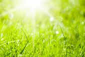 Abstract background with sun and green grass