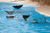 Dolphins Wawing