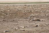 Fundo de Lago seco