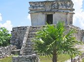Palm Tree And A Small Maya Temple, Tulum, Mexico poster