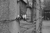 stock photo of auschwitz  - Barbed wire in Auschwitz I  - JPG