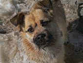 kleiner Hund mit kleinen Bart 3