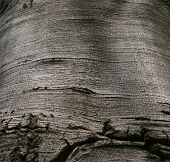 image of beechnut  - Beech Bark Beech Tree Beechnut Tree Tree Bark Beechnut Bark Old Tree - JPG