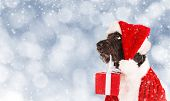Black dog in santa outfit and christmas gifts poster