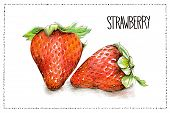 Hand Drawn Watercolor And Pencil Illustration Of Strawberries With The Handwriting Strawberry And A  poster