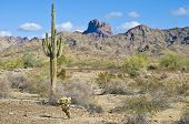 Arizona desert with saguaro cactus