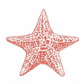 Starfish Sketch. Starfish Hand Drawing Vector Illustration poster