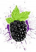 Vector blackberry with splash on background
