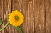 Bright Yellow Sunflower On A Weathered Brown Wooden Background (top View, Copy Space On The Right Fo poster
