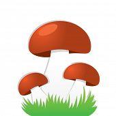 Simple mushrooms