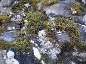 Mossy Snowy Rock