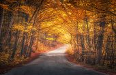 Amazing Autumn Forest With Empty Road In Fog In The Morning poster
