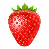 vector illustration of strawberry