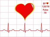 A healthy heart vector illustration with a cardiac trace showing normal sinus rhythm, blood pressure and pulse