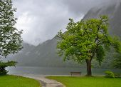 Bench under tree in front of Konigsee lake, Bavaria, Germany