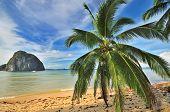 Bounty Tropical Paradise Beach with Palm