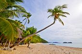 Exotic Tropical Vacations Beach Scene