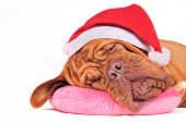 Santa Dog is Dreaming of Christmas