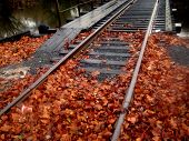 Train Tracks Across Pond With Fall Leaves