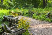 picture of split rail fence  - A path by a split rail fence with wildflowers  - JPG