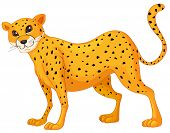 illustration of a cheetah on a white background