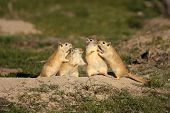 Funny rodents