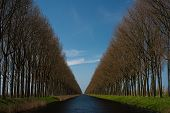 Beautiful Tree Row Landscape