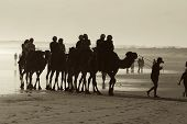 Camel Rides On Beach