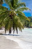 Anse Volbert Beach On Praslin In Seychelles