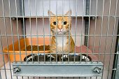 Refugio de animales