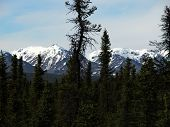Alaska Mountains & Trees