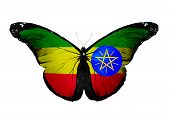Ethiopian Flag Butterfly, Isolated On White Background