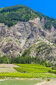 vineyards, Drome Department, Rhone-Alpes, France