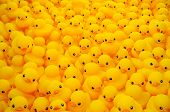 Group of yellow rubber duck