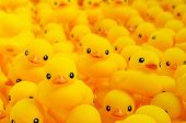 Close up of yellow rubber duck