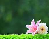 artificial pink lilly flower and white gerber on green grass field with beautiful blur background an
