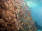 Two fish school