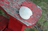 Seashell On A Armrest
