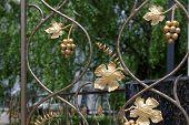 Fragment of decorative lattice in shape of grape vine in Kiev Ukraine